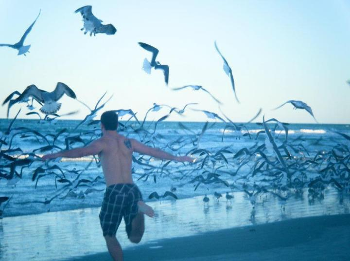 logan chasing sea gulls